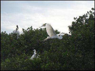 Bird2_flight_2008