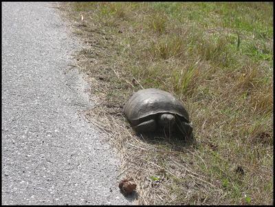 Tortoise_2008_4